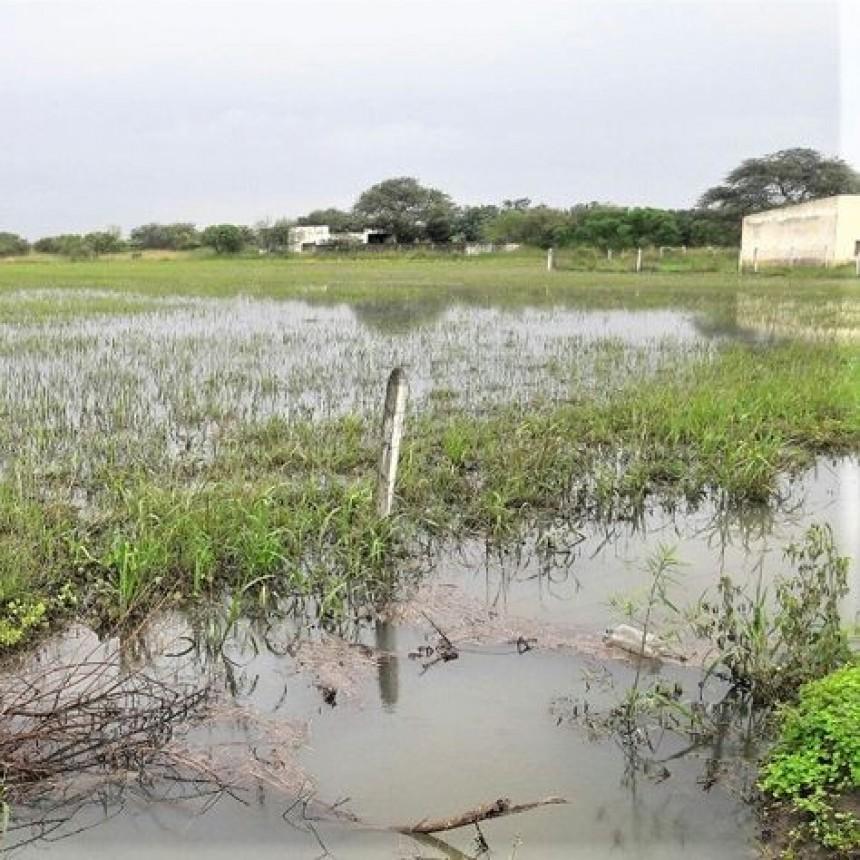 Santa Sylvina y Chorotis podrían ser declaradas en emergencia agropecuaria
