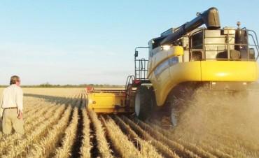 Con rindes dispares, arrancó la cosecha de trigo en el Chaco
