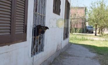 """El perro """"Maravilla"""" evitó que un sujeto se llevara a un niño en el barrio Santa Elena"""